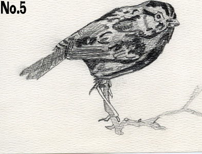 pencilbirddrawing